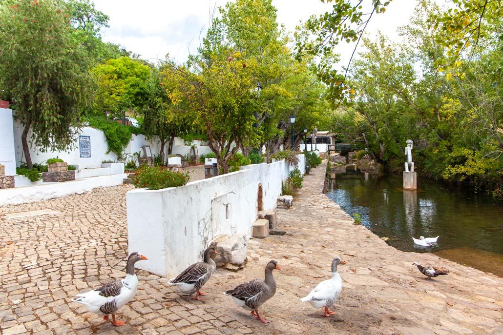 Alte village ducks at fountain