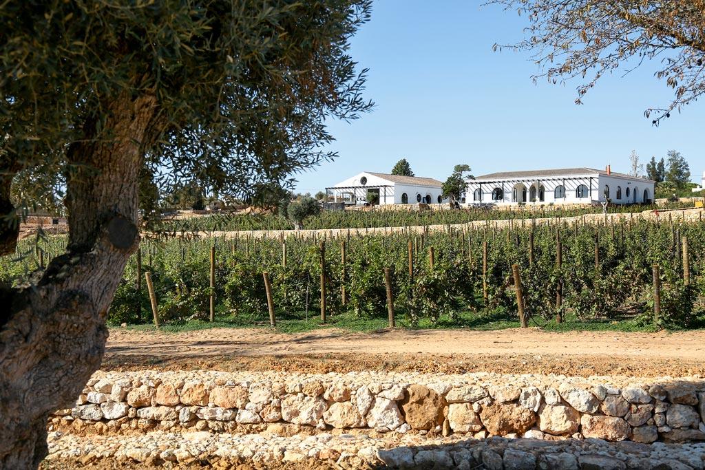 Quinta dos Santos vineyard